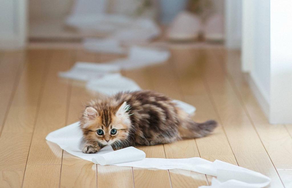 gatto casa pulita