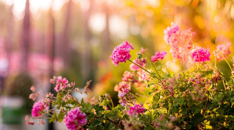Primavera in casa fiori